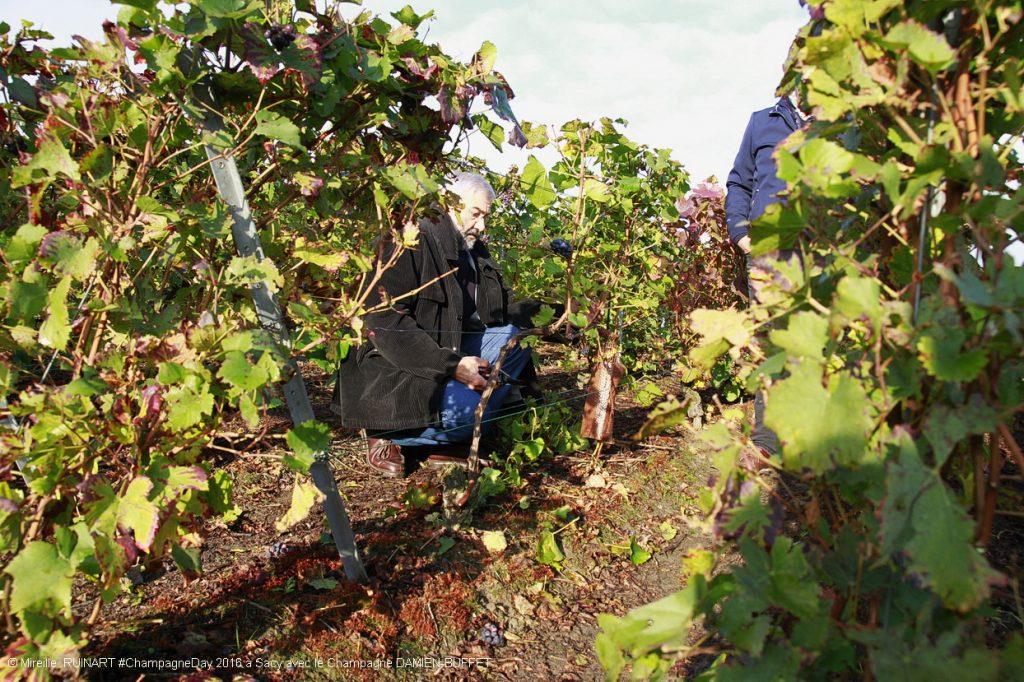 demonstration de taille de vigne sacy chez champagne damien-buffet