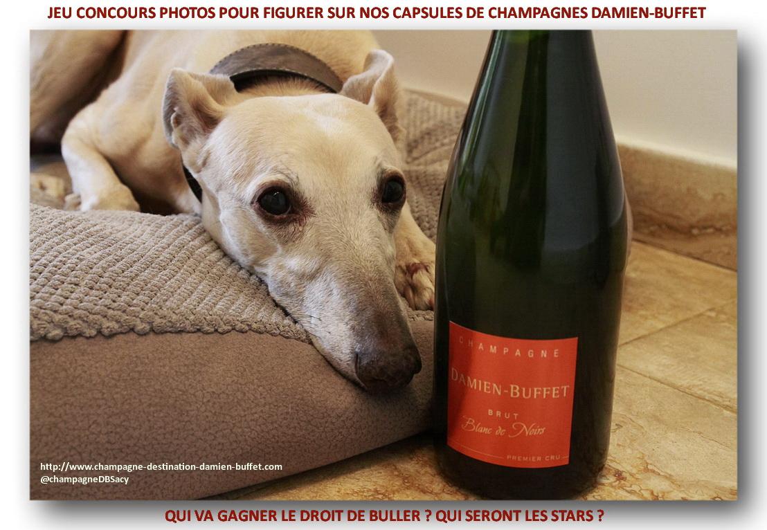 concours-photos-levrier-champagne-damien-buffet-frteaser