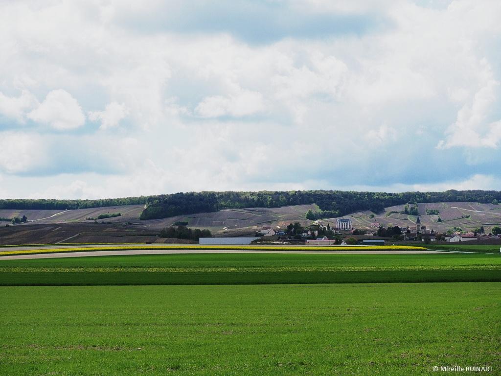 balade randonnee entre foret parc naturel regional et vignes de sacy